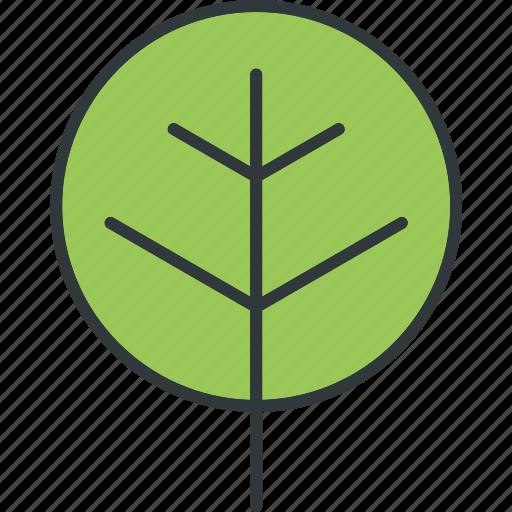 green, leaf, leaves, plant icon