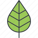 green, leaves, plant, tree icon