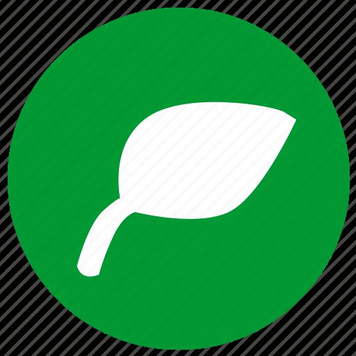 eco, ecology, leaf, nature, plant icon