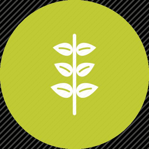 decoration, flower, garden, nature, plant, pot, spring icon