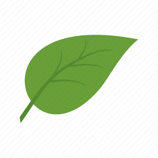 autumn, fall, green, isolated, leaf, leaves, nature icon