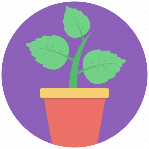 greenery, indoor plant, plant, plantation, potted plant icon