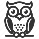 owl, wisdom, education, bird