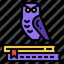 animal, bird, book, owl