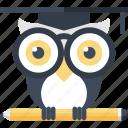 bird, education, intelligence, knowledge, owl, school, wisdom
