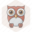 bird, learning, owl, professor, school, study, teacher icon