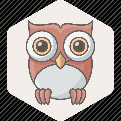 bird, learning, owl, professor, school, study, teacher icon