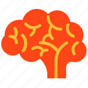 brain, design, genious icon icon icon