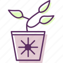 bush, ferns, plant, pot, shrubs icon