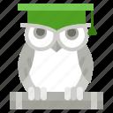 academic hat, knowledge, owl, wisdom