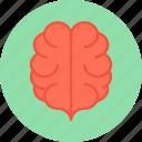 brain, head icon