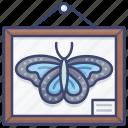 biology, butterfly, science, specimen