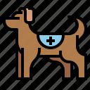 animal, dog, emergency, pet, rescue