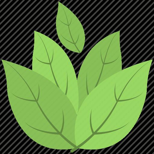 ecology, foliage, greenery, leafs, tree branch icon