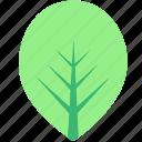 green, leaf, leaves, nature, plants