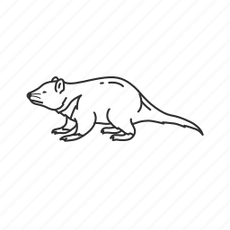 devil, mammal, small land mammal, tasmanian devil icon