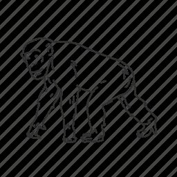 chimp, chimpanzee, mammal, medium land mammal icon