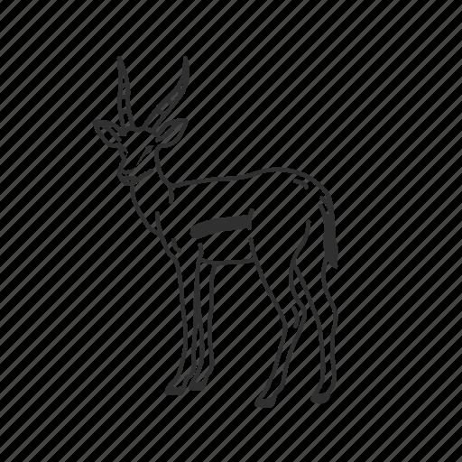 Gazelle, mammal, medium land mammal icon - Download on Iconfinder