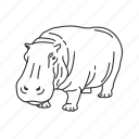 hippo, hippopotamus, large land mammal, mammal icon