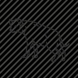 hyena, mammal, medium land mammal icon
