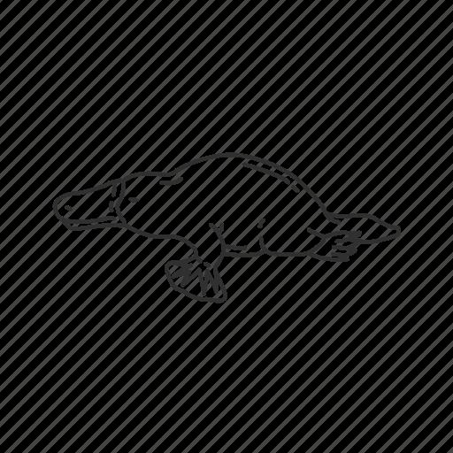 egg laying mammal, mammal, platypus, small semi-aquatic mammal icon