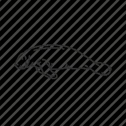 large marine mammal, mammal, sea cow, sirenia icon