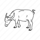 cow, large land mammal, mammal, water buffalo icon
