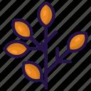 autumn, brown, fall, leaf, season