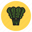 fruits, spinach, kale, leaf, chard, fall, vegetables icon