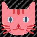 animals, breed, cat, pet icon