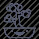 bonsai, old, plant, tree icon