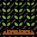 grow, leaf, nature, plant