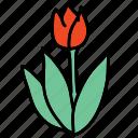 beauty, color, dutch, farm, spring, tulip icon