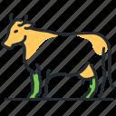 animal, cow, farm, livestock icon