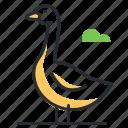 animal, bird, farm, goose