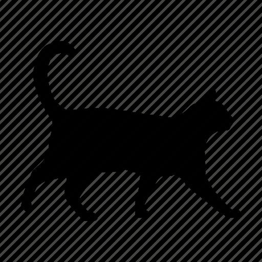 cat, gato icon