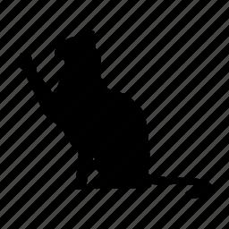 cat, cat2, gato, pet icon