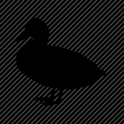 bird, duck, farm, pato icon