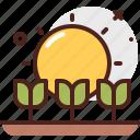 agriculture, gardening, landscape, sun