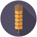 agriculture, ceral, farm, food, grain, plant, wheat icon