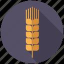 agriculture, ceral, farm, food, grain, plant, wheat