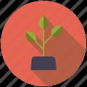 agriculture, farm, growth, plant, soil