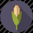 agriculture, cereal, cob, corn, farm, plant
