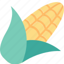 corn, cob, cooking, food, healthy, maize, vegetable