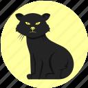 cat, feline, persian