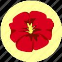 bloom, flora, flower, pansy