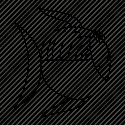 animal, fish, ocean, sea, water icon