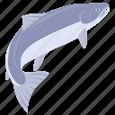 fish, food, salmon, sea, seafood, kitchen, meal