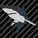fish, food, sea, seafood, shark icon