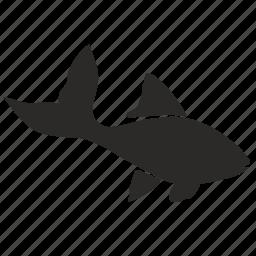 fish, move icon